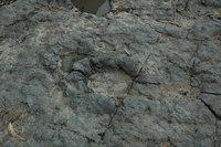 dinosaur-track-1397138