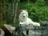 wolf-pack-1350722