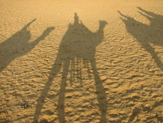 camel-shadows-1370980